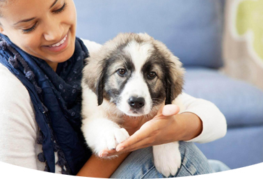 When Can Dogs Eat Puppy Food, Adult Dog Food, and Senior Dog Food?