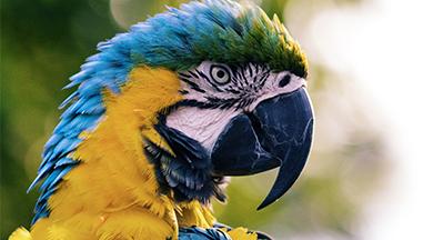 Food, Treats For Bird